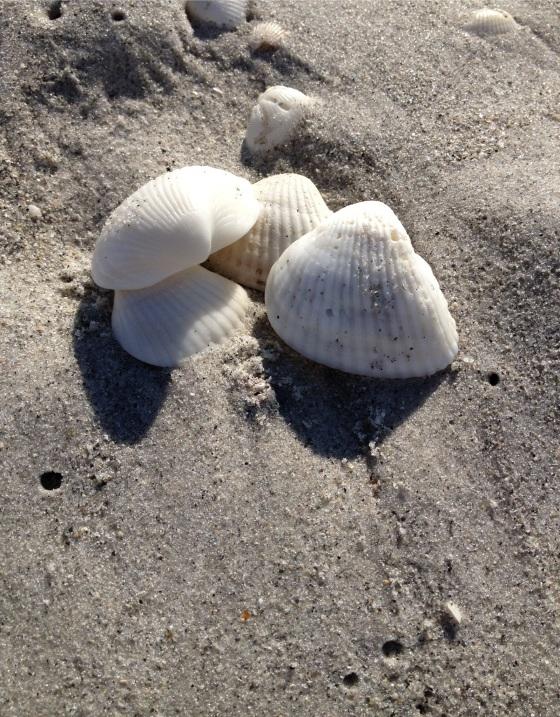 Shells on Bowman's Beach