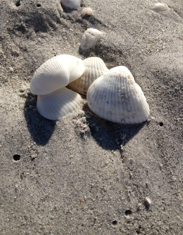 Shells on Bowman's Beach