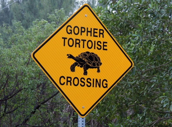 Gopher Tortoise Sign