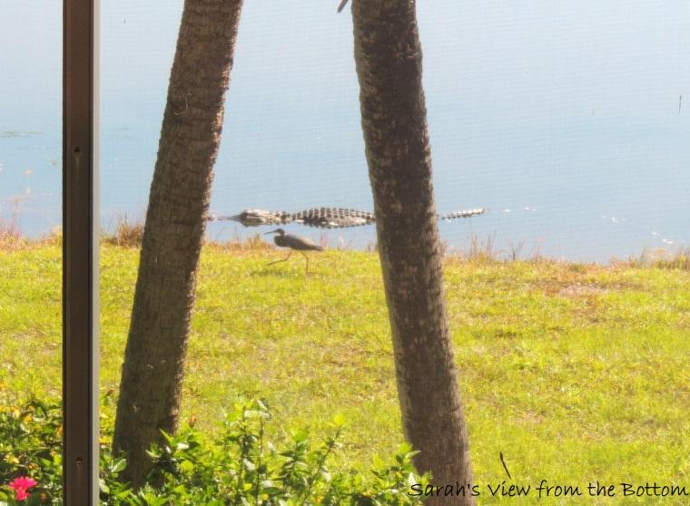 gator and bird